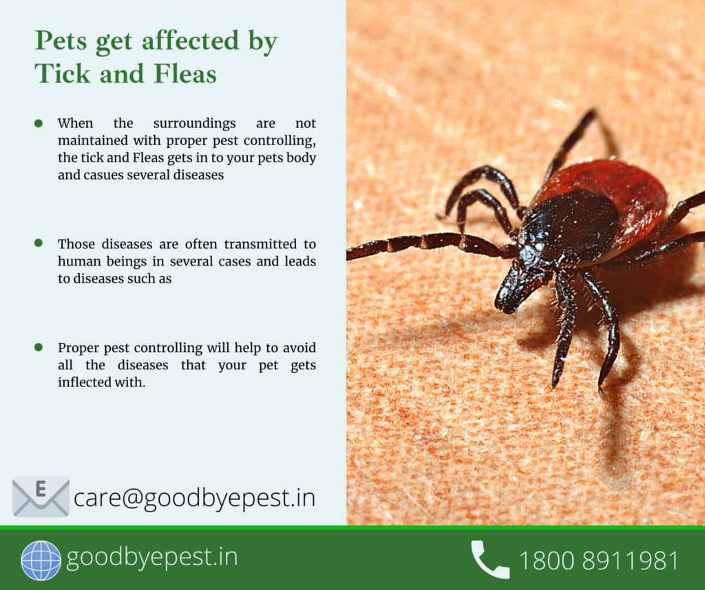 covid protection & pest control