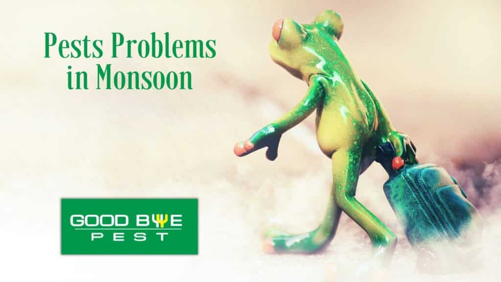 pests problems in monsoon